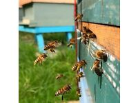 Land for beekeeping wanted
