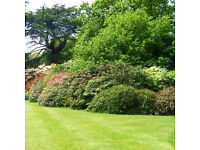 Professional garden services and grass cutting - Coventry and surrounding area