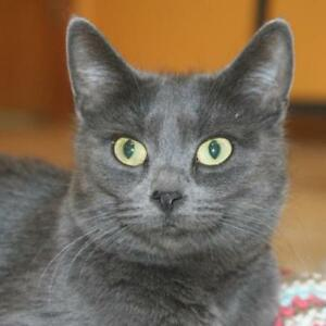TAY TAY - SPAYED FEMALE CAT FOR ADOPTION
