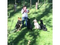 dog walking & pet sitting in Willesden green,Willesden, West Hampstead and Queen's Park areas. (NW2)