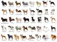 Dogsrus