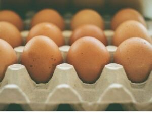 Organically fed eggs