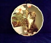 Kitten Plates