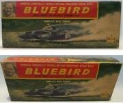 Bluebird Model