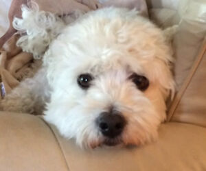 House/Pet Sitters Kelowna  & area by retired couple♥️