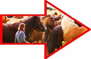 [DELIVERED] horse round yard & panels ► Laidley Lockyer Valley Preview