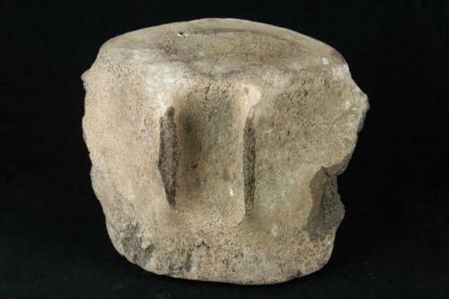 MUSEUM QUALITY GUARANTEE Pre-Historic DINOSAUR FOSSIL Vertebrate Fossil 9.25LB