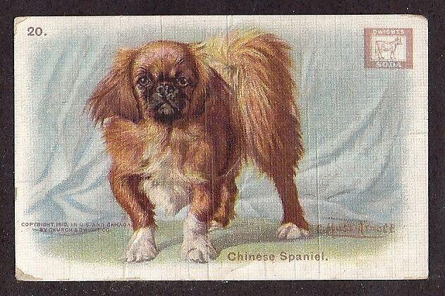 1902 Dog Art Study Dwight Soda Trade Card PEKINGESE / PEKE / TIBETAN SPANIEL #20