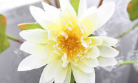 LOW PRICE! Artificial Water Lily Flower - 6 Pcs Bunch - 37 In