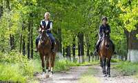 Four (4) x 60-Minute Introductory Horseback-Riding Lessons
