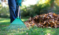 647-858-8911 Fall Clean ups, leaf collection and bagging