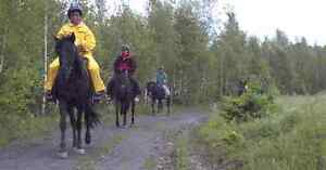NEW PRICE! HORSE FARM APPROX.. 25 MIN TO HALIFAX, NS