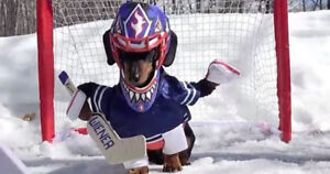LOOKING FOR A GOALIE FOR WINTER SHINNY HOCKEY IN THORNHILL