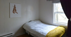 $350 POU Room available immediatly in heart of Downtown