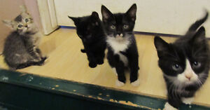 Hand raised adorable country kittens