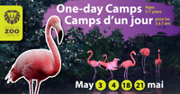 May 21 one day zoo camp/Le camp d'une journée au zoo le 21 mai