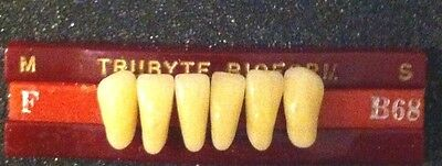 Dentsply Dentist Dental Lab Bioform Porcelain Denture Teeth C  62