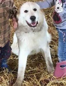 OVLPN - Lost dog in Godmanchester