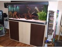 Fluval Roma 125 marine tropical cold water fish tank with setup