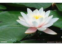 Full body Thai massage and deep tissue massages and Swedish massage