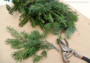 Are you cutting down an Evergreen Tree?