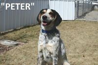 LETHBRIDGE & DISTRICT HUMANE SOCIETY *1 ADOPTABLE COONHOUND!