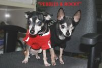 LETHBRIDGE & DISTRICT HUMANE SOCIETY - *5 ADOPTABLE DOGS!