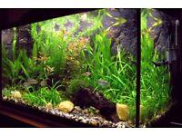 Live Aquarium Plants ONLY £1.50 a Bunch !