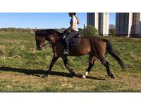 Horse for loan - Belle
