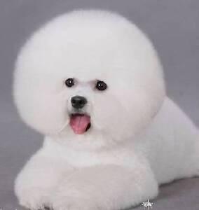 Best Seller - 16 oz. Bright Shampoo For White hair Doggie Newtown Inner Sydney Preview