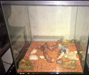 2 Hermit Crabs and Enclosure Lutana Glenorchy Area Preview