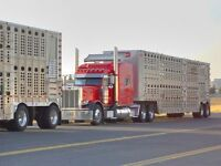Quality Truck Driver Wanted