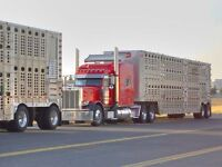 Experienced Livestock Driver