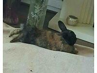 Neutered rabbit