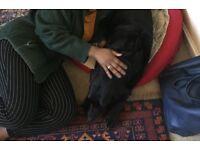 Dog Walking/Home sitting