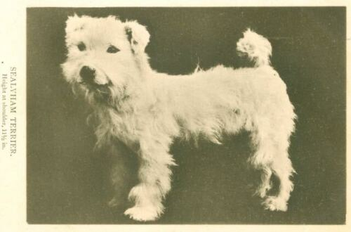 Vintage Sepia Dog Postcard Sealyham Terrier Waterlow & Sons England c1910