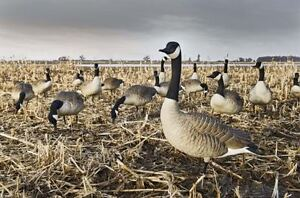 WTB Goose and Duck decoys