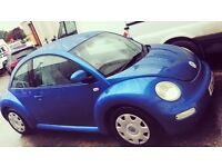 Lovely little blue beetle named Betsy to go to a loving home!💙💙💙