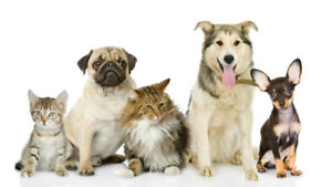 DOG AND CAT NAIL TRIMS DONE IN YOUR HOME