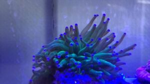 Saltwater Coral and fish