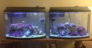 Aquarium 36 Gallon Saltwater