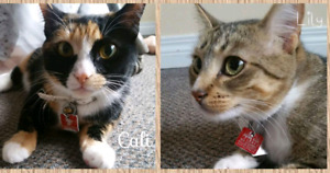 Missing our cats from Blumenort Manitoba