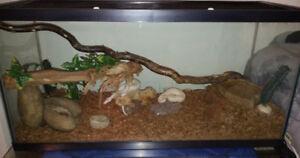 3 terrarium toute équipé a vendre pour reptile