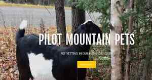 Pilot Pountain Pets - Pet Sitting in Our Home or Yours!