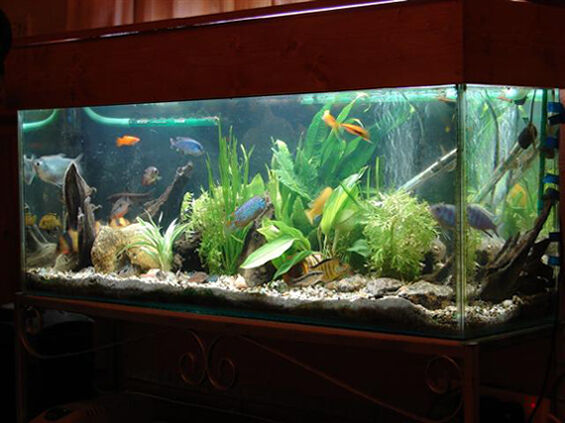 How do you clean fish tanks?