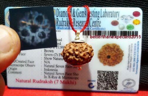 7 Mukhi Rudraksha / Seven Face Rudraksh Java Bead Lab Certified- 18- 20 MM