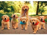 Do You Need A Pet Sitter/Dog Walker