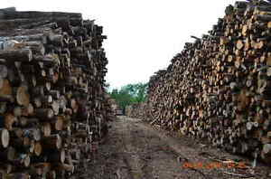 HUNDREDS of 2015 cut Dry Hardwood