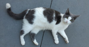 Lost Cat Wooler area