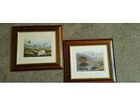 Set of framed wildlife prints